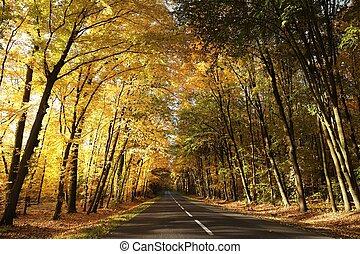 floresta, alvorada, outono