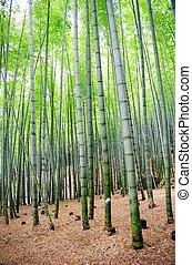 floresta bambu