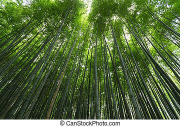 floresta, bambu, japão