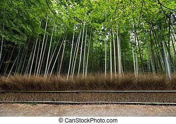 floresta, bambu, kyoto