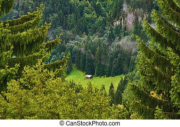 floresta, celeiro