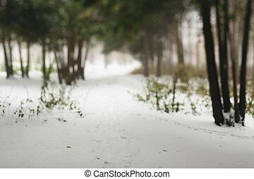floresta, cena, wintery