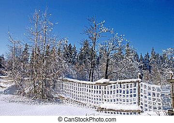 floresta, cerca, neve