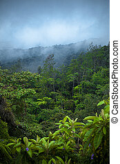 floresta, chuva