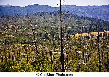 floresta, com, fogo, danificado, árvores, com, pretas,...