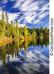 floresta, e, céu, refletir, em, lago