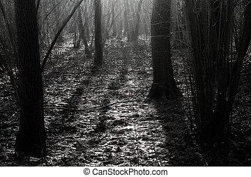 floresta, em, a, manhã