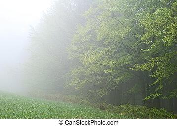 floresta, em, a, nevoeiro