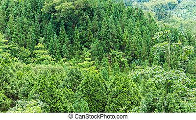 floresta, em, montanha