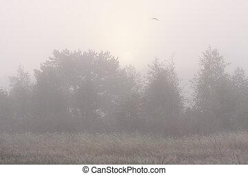 floresta, em, névoa, e, pássaro voador