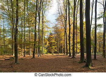 floresta, em, outono, cores