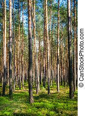 floresta, em, polônia