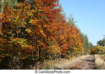 floresta, estrada, em, outono