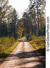 floresta, estrada, ligado, um, ensolarado, dia outono