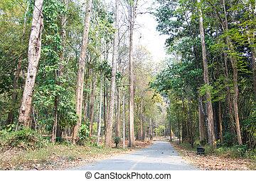 floresta, estrada, paisagem, close-up, fundo