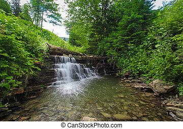 floresta, fluxo