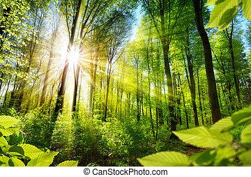 floresta, foliage, sunlit