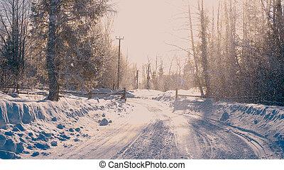 floresta, hoarfrost., inverno, snowfall.