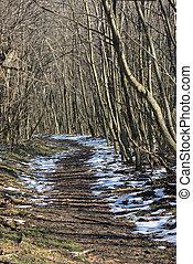 floresta, inverno, anoitecer