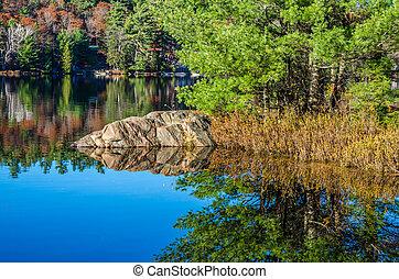 floresta, lago
