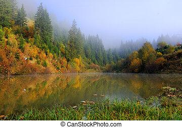 floresta, lago, em, outono