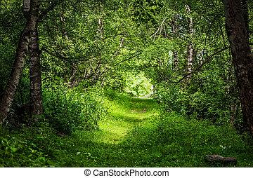 floresta, magia, bonito