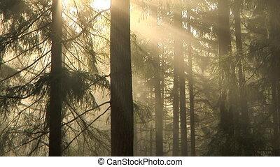 floresta, manhã, lapso, tempo