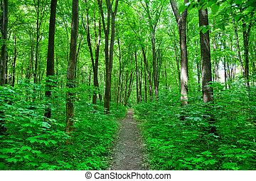floresta, natureza