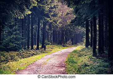 floresta nebulosa