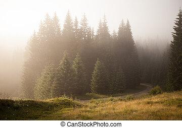 floresta nebulosa, manhã