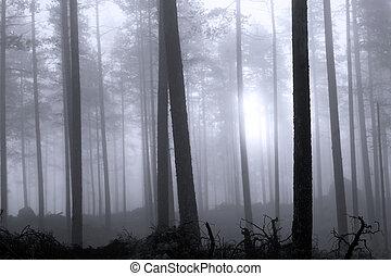 floresta, nebuloso