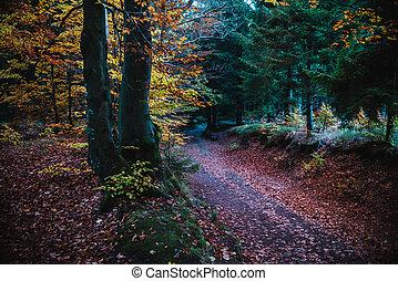floresta outono, árvores, coloridos, caminho
