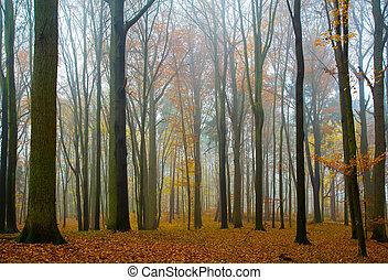 floresta outono