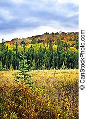 floresta, outono