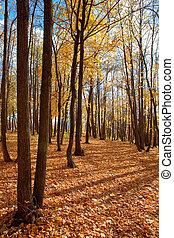 floresta outono, cena