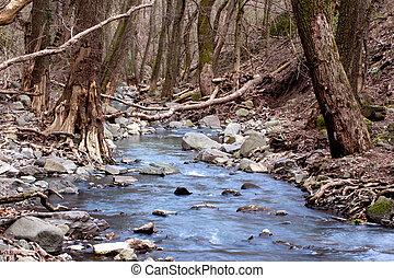 floresta outono, com, pequeno, riacho