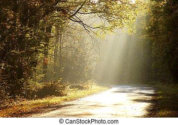 floresta outono, estrada, manhã