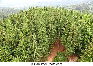 floresta, paisagem, em, a, colinas
