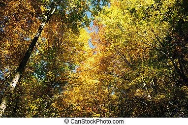 floresta, paisagem, em, autumn.