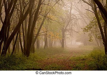 floresta, paisagem, em, outono