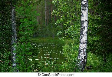 floresta, paisagem, escandinavo