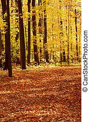 floresta, paisagem, outono