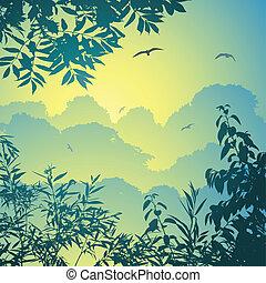 floresta, paisagem