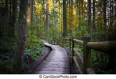 floresta, parque, estrada