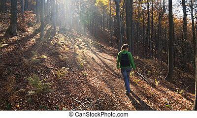 floresta, passeio
