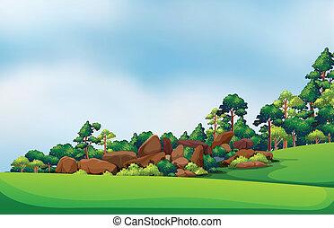 floresta, pedras