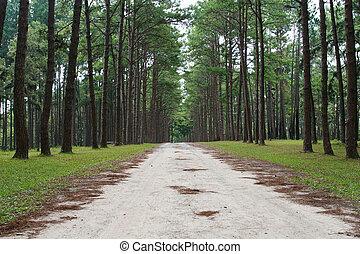 floresta pinho