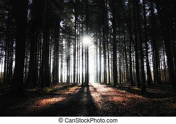 floresta, raios, sol