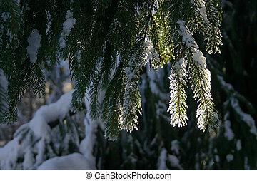 floresta, ramo, inverno