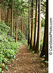 floresta, rastro, açores, portugal